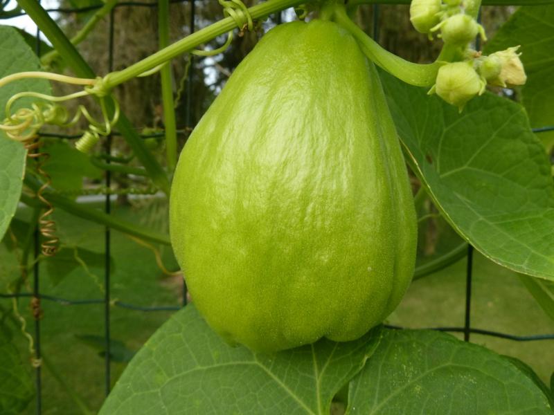 legume commencant par g - L'équipement de puericulture